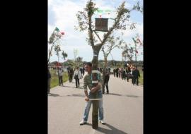 La processione arborea di S. Pietro in Bevagna - Terza puntata